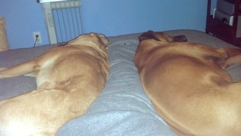 legs trapped in bed