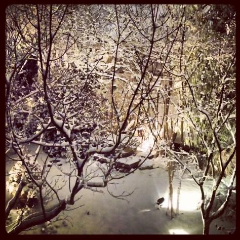 A rare few inches of snow.