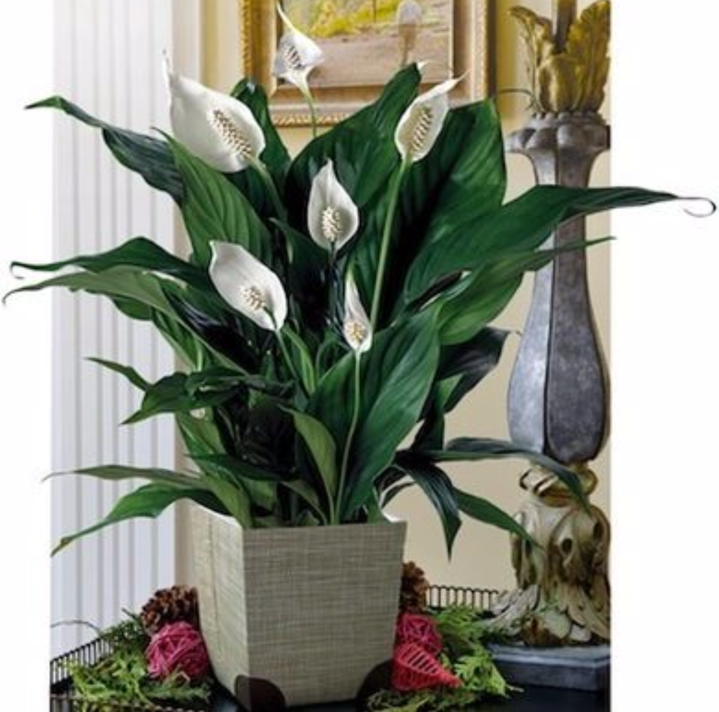 Plants that clean indoor air. ag and Bone Shop of the Heart - ^